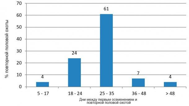 Рисунок 4. Анализ повторной половой охоты в неблагоприятный период  (июль-сентябрь 2015).