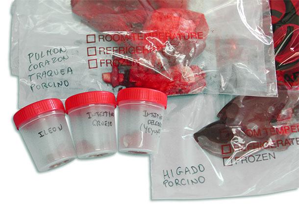 Каждый орган или отдел кишечника должен быть упакован по отдельности в герметично запечатанный контейнер