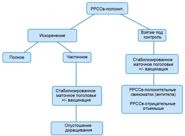 Рисунок 1. Схематичное изображение различных подходов при работе с РРССв-положительными поголовьями