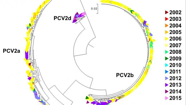 Рисунок 2. Филогенетическое дерево максимального правдоподобия. 729 последовательностей открытых рамок считывания 2 из базы данных относительно ЦВС-2 из Лаборатории ветеринарной диагностики Университета Миннесоты окрашены по годам в зависимости от года получения. Генотипы обозначены.