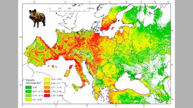 Рисунок 2. Предположительное количество диких кабанов в Европе. Источник: FAO-ASFORCE, май 2015.