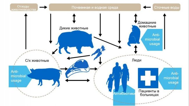 Факторы, обуславливающие противомикробную резистентность в различных секторах.Синим отмеченоуправление антибиотиками. Http://www.effort-against-amr.eu/