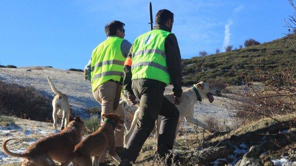 Фото 5. Охота, отстрел – это необходимость, однако, собакам доступ на ферму должен быть закрыт.