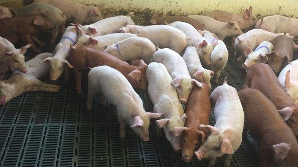 Рисунок 2. Животные с клиническими симптомами потери физических кондиций.