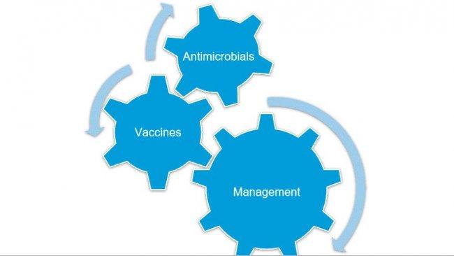 Рисунок 1. Полный контроль над Mycoplasma hyopneumoniae достигается, если комбинируются различные стратегии.