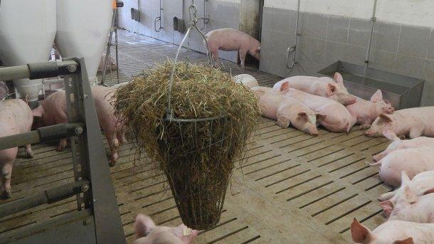 Фото 2. Материалы для манипуляций, доступные свиньям. Фото любезно предоставлено Инге Бёхне.