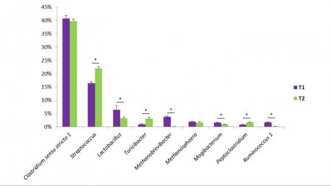 Figure 1. Некоторые виды бактерий, обнаруженные в эксрементах свиней. T1 - контрольная группа. T2 - группа, получавшая с кормом набор палочковидных бактерий.