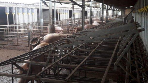 Изображение 3. Типы станков на ферме.