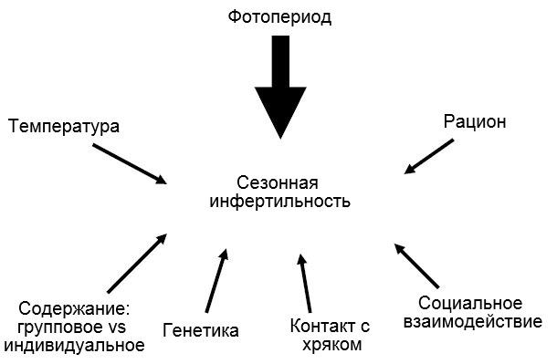Изображение 7. Факторы, влияющие на появление сезонной инфертильности.