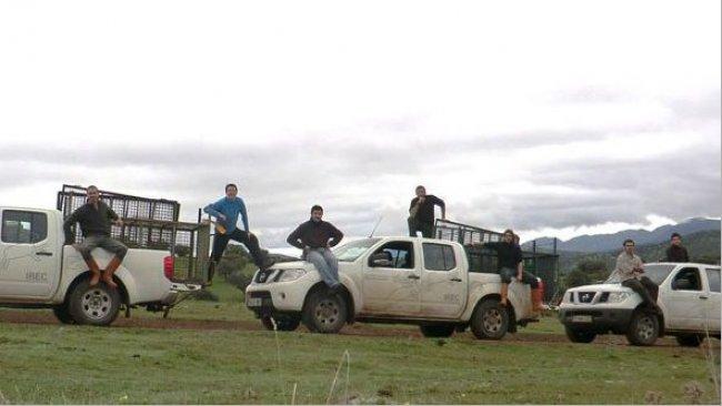 Фото 2. Отлов с помощью западней или ловушек – решение для районов, где охота на кабанов невозможна, однако, это решение недешево и не всегда эффективно.