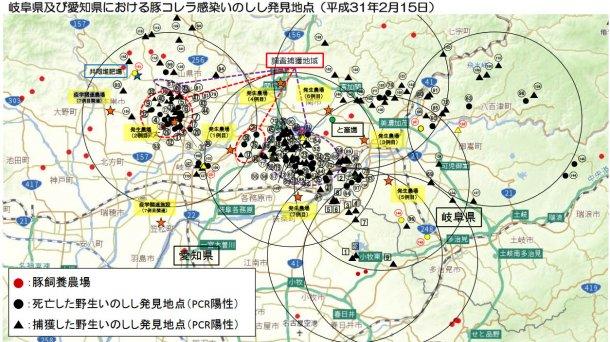 Карта показывает общее число павших и отловленных диких кабанов, оказавшихся положительными по заболеванию, а также пораженные болезнью свинофермы (выделено желтым), по состоянию на 15 февраля 2019 г.