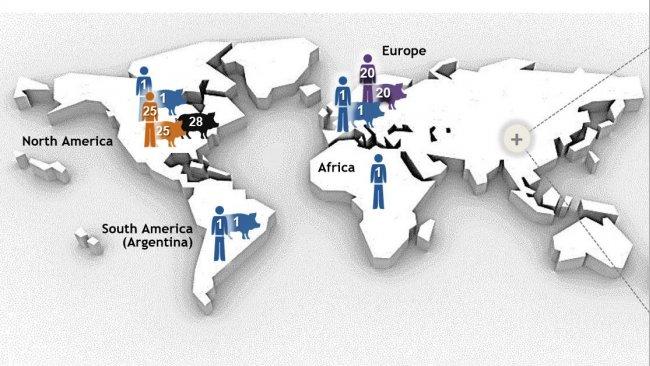 Рисунок 1. Самые важные типы последовательностей (STs) серотипа 2 Streptococcus suis, определенные мультилокусным секвенированием (MLST). Штаммы ST1 серотип 2 прочнее всего связаны с болезнью свиней и человека в Европе, Азии, Африке и Южной Америке (Аргентина). ST7, однолокусный вариант ST1, эндемичен в материковом Китае. Другая ситуация в Северной Америке, где описано всег несколько случаев инфекции ST1 у свиней и всего 1 случай – у человека. На самом деле, штаммы Североамериканского серотипа 2 относятся, в основном, к ST25 (человек и свиньи) и ST28 (только свиньи). Эта последняя ST так же ассоциируется с клиническими случаями у свиней в материковом Китае, Австралии, Японии и Тайланде. Интересно то, что Япония и Тайланд – единственные страны, из которых сообщали о случаях ST28 так же и у человека. Кроме того, случаи североамериканского ST25 были зафиксированы в Австралии и Тайланде. Наконец, ST20 превалентен только в Европе (в основном, в Нидерландах). На этом рисунке, числа (1, 20, 25, 28, 104) в разных местах представляют различные STs (т.е., ST1, ST20, ST25, ST28, ST104), и каждый ST показан различным цветом. Рисунок был взят, с изменениями, из: Segura M, Fittipaldi N, Calzas C, Gottschalk M. Critical Streptococcus suis virulence factors: Are they all really critical? Trends Microbiol. 2017; 25(7):585-599. doi: 10.1016/j.tim.2017.02.005, разрешение на использование имеется.