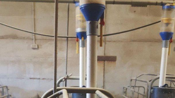 Рисунок 3: С помощью кормового диспенсера подача корма может легчерегулироваться как до, так и после опороса, что в дальнейшем обеспечивает свободный доступ к корму.