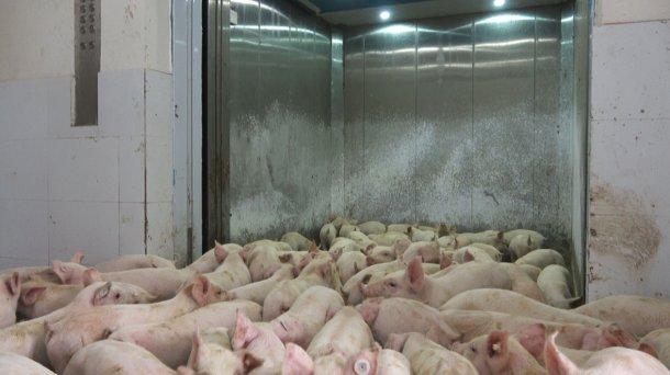 Фото 6: Лифт для перевозки животных.
