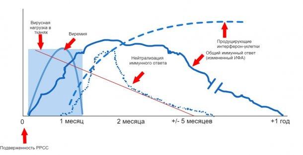 График 1: Ответ иммунной системы свиноматки, зараженной вирусом РРСС. (López иOsorio, 2004).