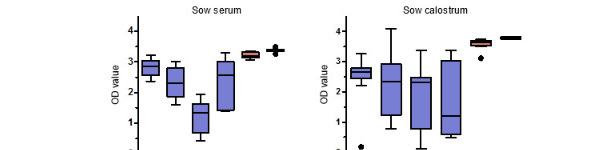 Уровни антител особых PCV2 IgG в сыворотке крови свиноматок и молозиве