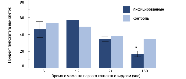 Интенсивность фагоцитоза H. parasuis альвеолярными макрофогами свиней, предварительно инфицированных РРССв