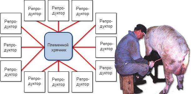 Схема распространения ЦВС-2 от