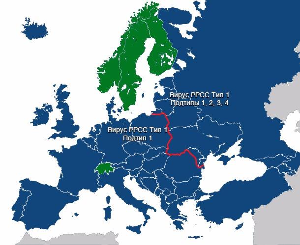 Разнообразие вирусов РРСС в Европе