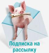"""Информационная рассылка """"pig333.ru за 3 минуты"""""""